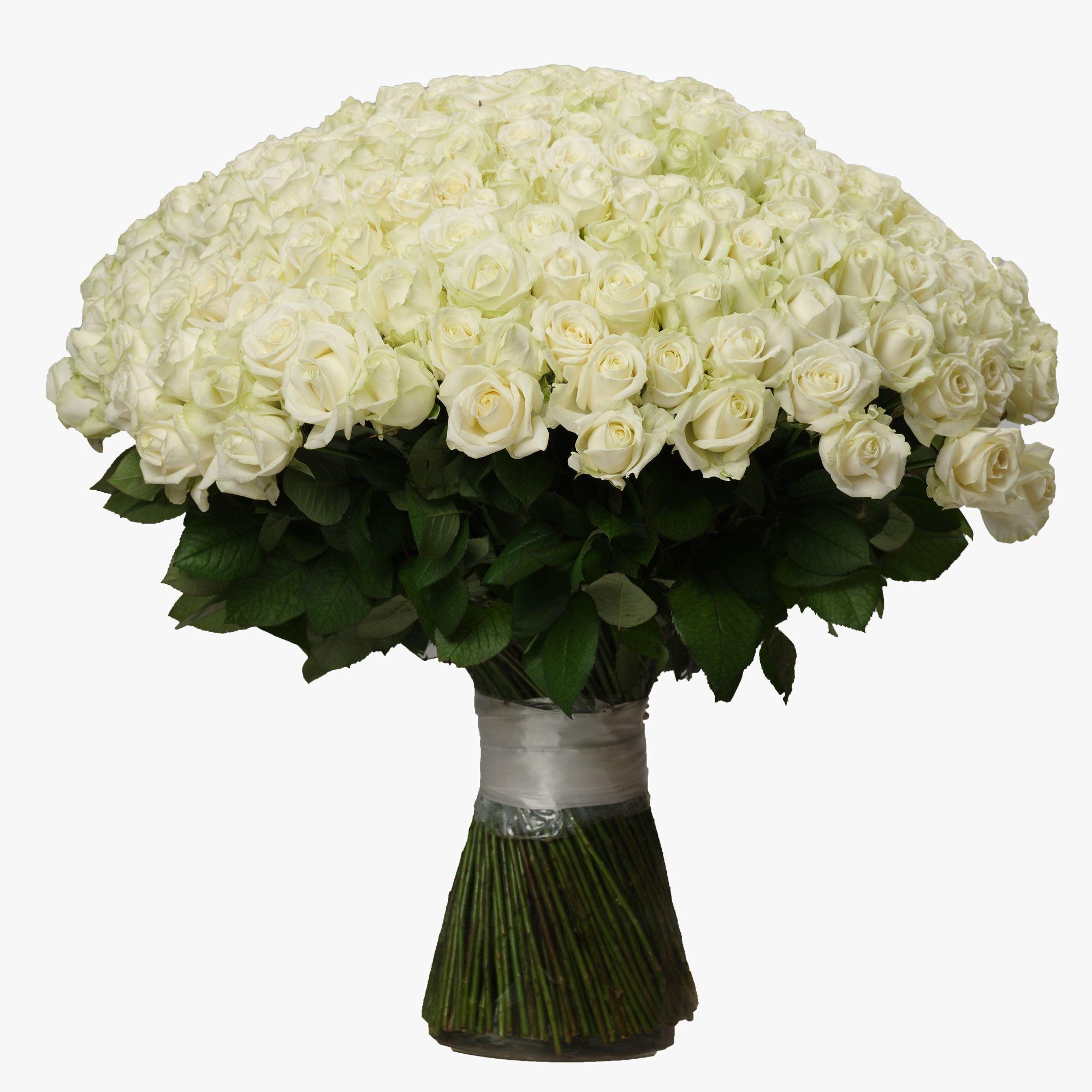 Букет из 301 розы купить недорого